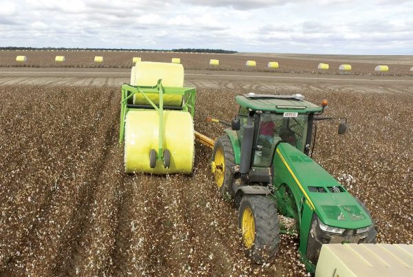 Front view of Bale Runner picking up Cotton bale